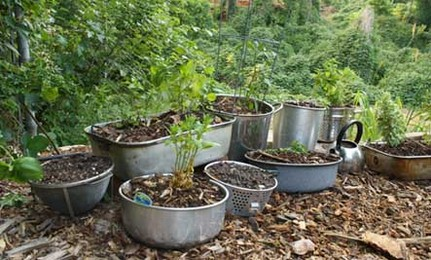 Grow using any old container you can find!