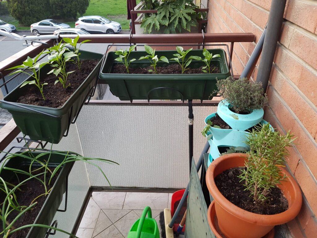 Our Italian Kitchen Garden herb patch