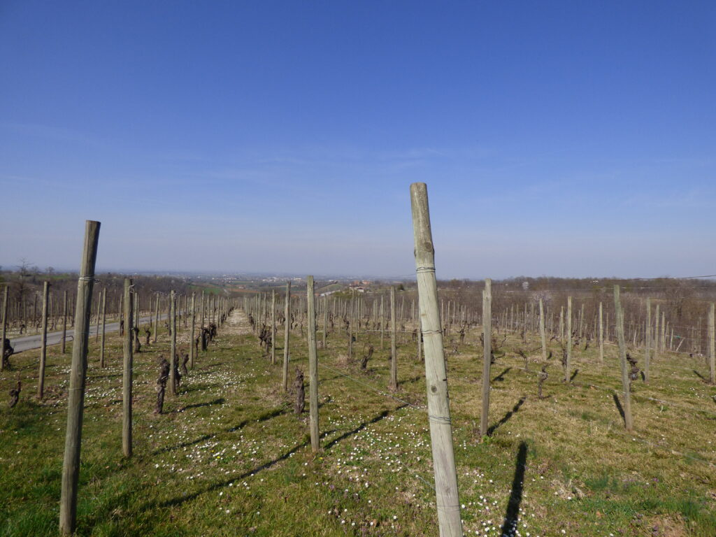 The view from La Stoppa vineyard