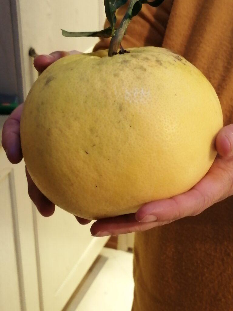 Italian grapefruit