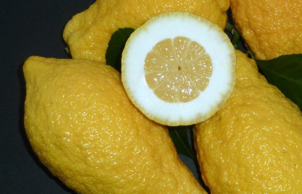 Cedro - citrus fruit of Calabria